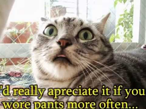 10+ Best Funny Animal Quotes