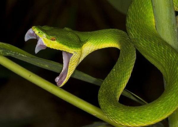 Tổng hợp chi tiết giấc mơ thấy rắn