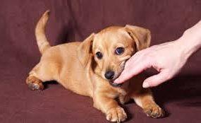 Mơ thấy chó giải mã bí ẩn giấc mơ