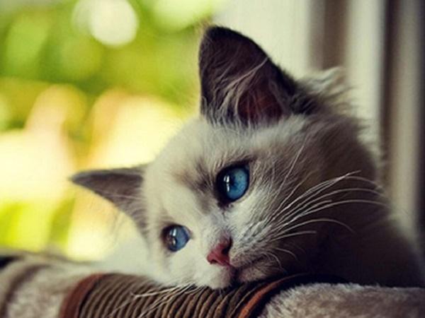 Mơ thấy mèo bị giết là điềm lành hay dữ, đánh số mấy?