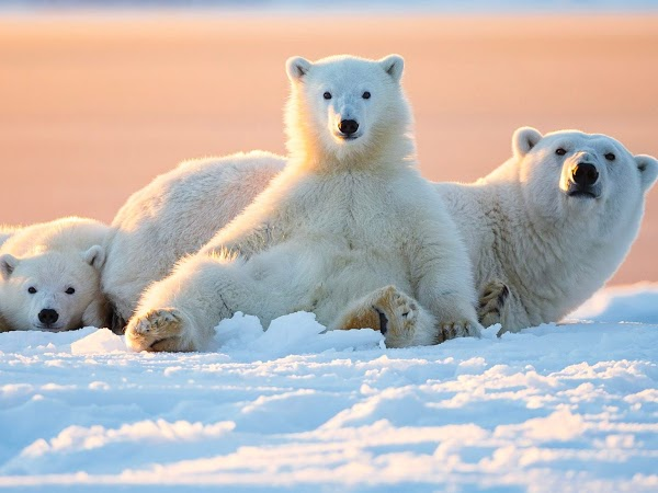 Giải mã giấc mơ thấy gấu là điềm báo điều gì?